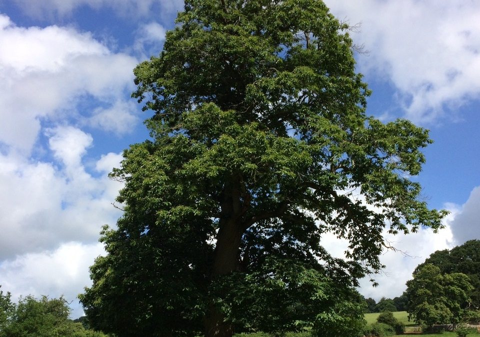 Celebrating the lives of trees