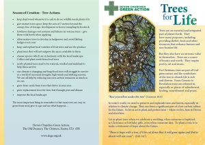 Trees for life leaflet