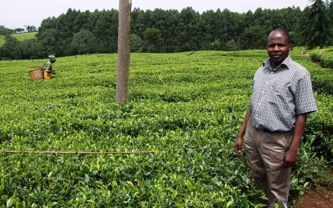 Tea growers visit Devon in Fairtrade Fortnight