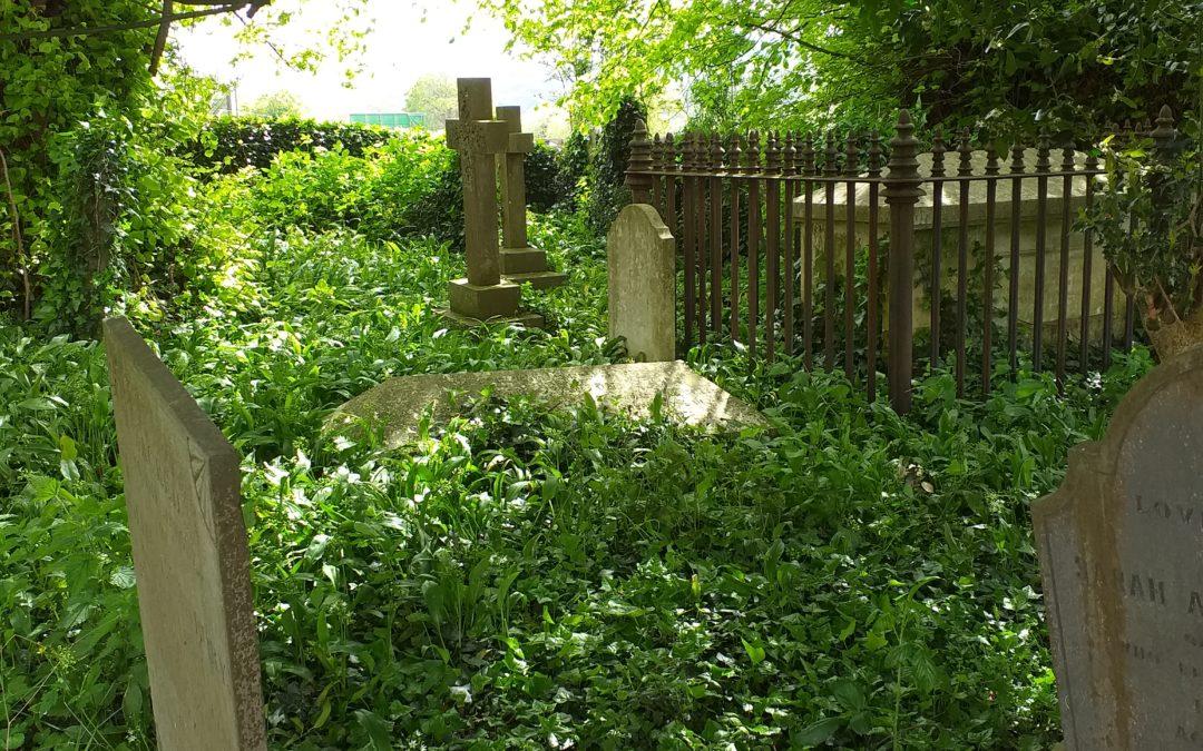 Call for 'Eco-churches' and environmentally-friendly churchyards across Devon