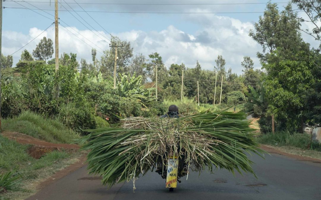 Appeal to raise £13,000 for project to help Thika farmers battling climate change