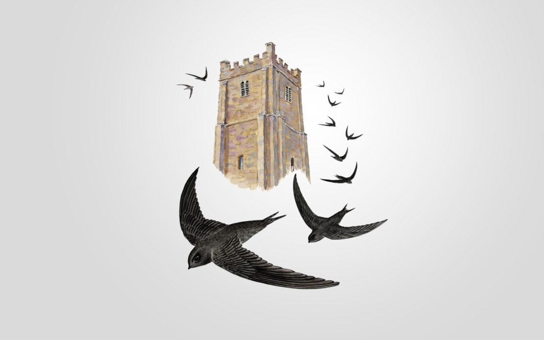 Live Swift Cams in Dartmoor Church