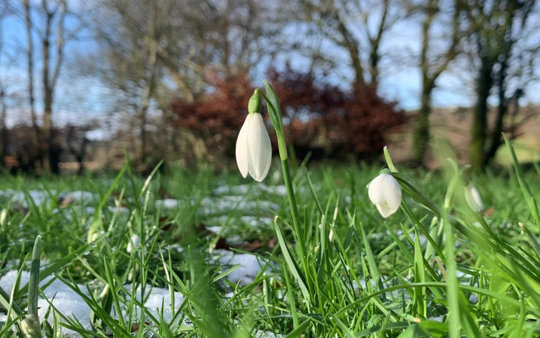 St Raphael's Healing Snowdrop Ministry