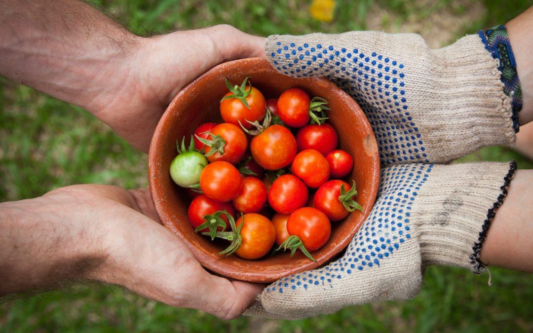 A Generous Harvest